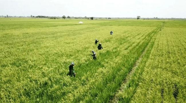 Petani bisa mendaftar asuransi pertanian menggunakan aplikasi SIAP. (Dok:Kementan)